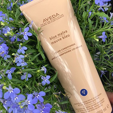 Aveda blue malva at Lada Salon & Spa in Lawrence, KS